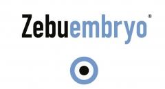Zebuembryo